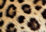 leopard change its spots - Jeremiah