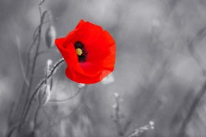 Remembering remembrance